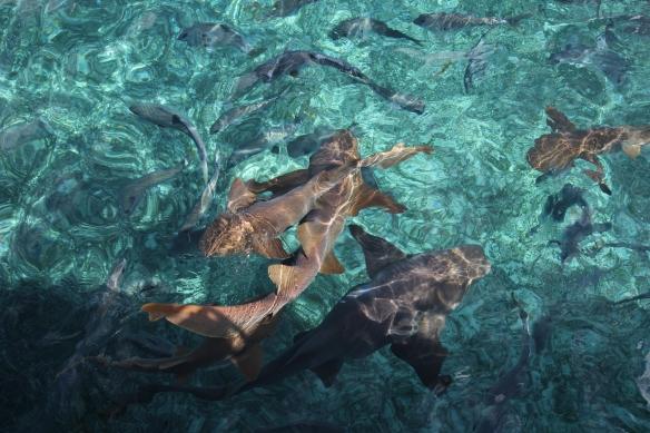 Yep, sharks.