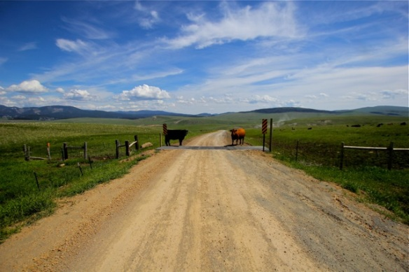 Montana guard cattle/cattle guard?